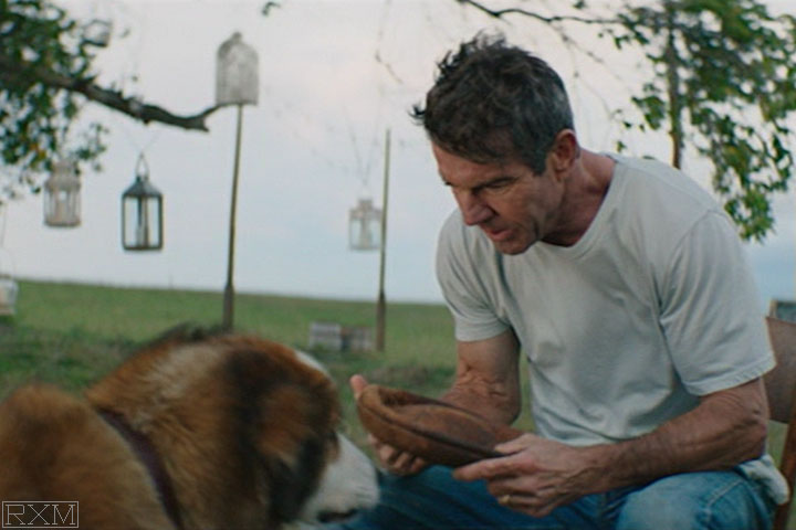 A Dog S Purpose 2017 Coins In Movies